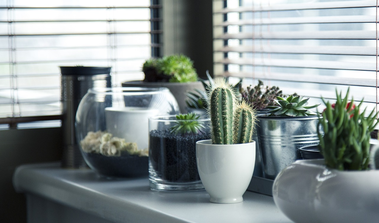 keep kitchen clean from pests